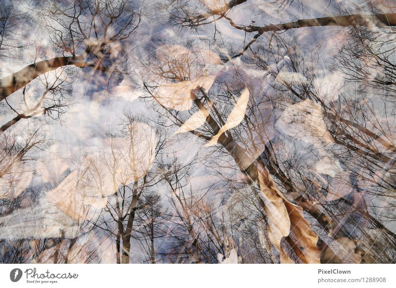 Herbst Natur Ferien & Urlaub & Reisen schön Baum Landschaft Blatt Tier dunkel Wald Traurigkeit Stil Lifestyle Stimmung Park träumen Feld