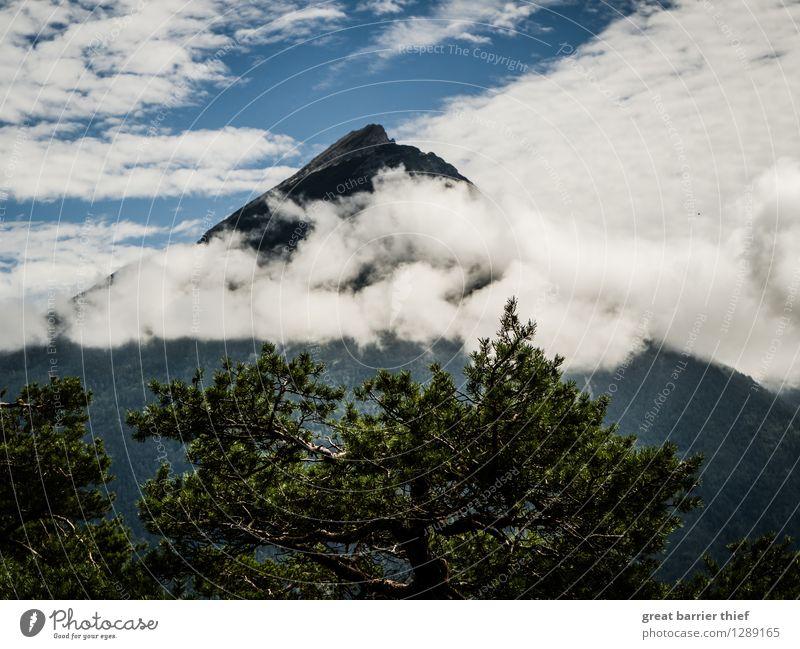Wolkenverhangener Berg Umwelt Natur Landschaft Tier Luft Himmel Frühling Sommer Schönes Wetter Pflanze Baum Alpen Berge u. Gebirge Gipfel genießen blau