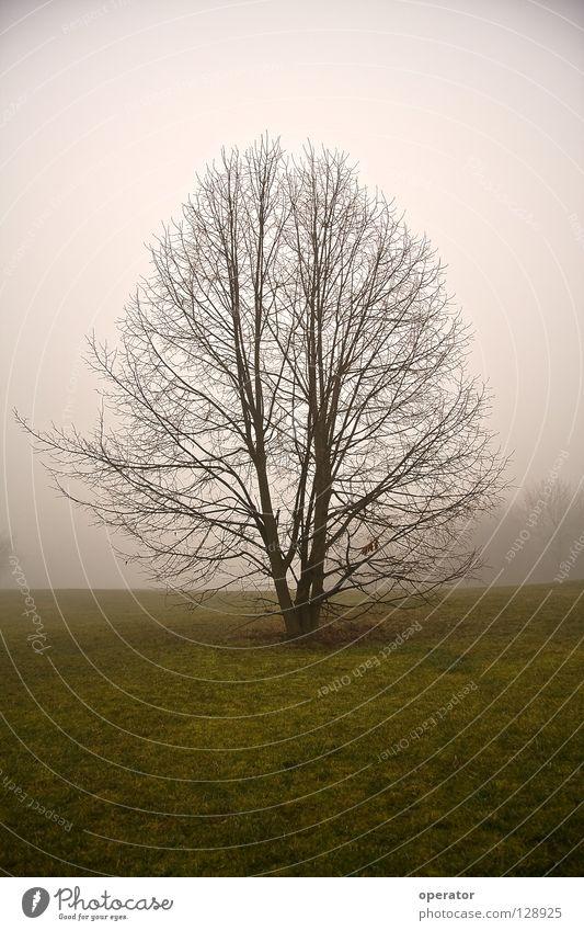 Hoffnung Baum Einsamkeit Wiese Herbst Nebel Ast Geäst