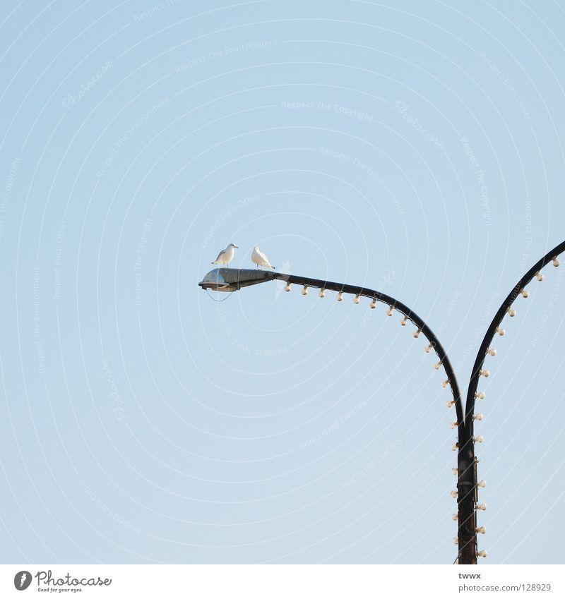 Aller Anfang: ein Tête-à-tête... Vogel Möwe Laterne hell-blau Flirten Lampe Laternenpfahl Straßenbeleuchtung Zusammensein nebeneinander Verbundenheit