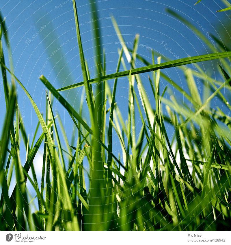 crosswise Natur Himmel grün blau Sommer Gras Linie verrückt frisch Perspektive Klarheit Landwirtschaft Weide Halm durcheinander Glätte