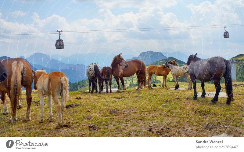 Pferdeherde Natur Ferien & Urlaub & Reisen Pflanze Sommer Landschaft Wolken Tier Berge u. Gebirge Horizont Zufriedenheit Wetter wandern Tiergruppe