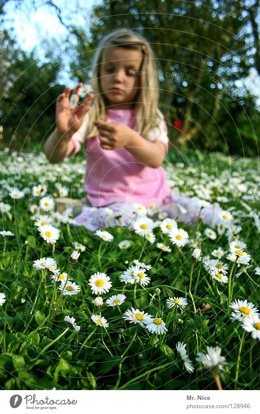 flower girl Kind Hand Mädchen schön Baum Blume Freude Gesicht Wiese Frühling Garten hell blond rosa Finger sitzen