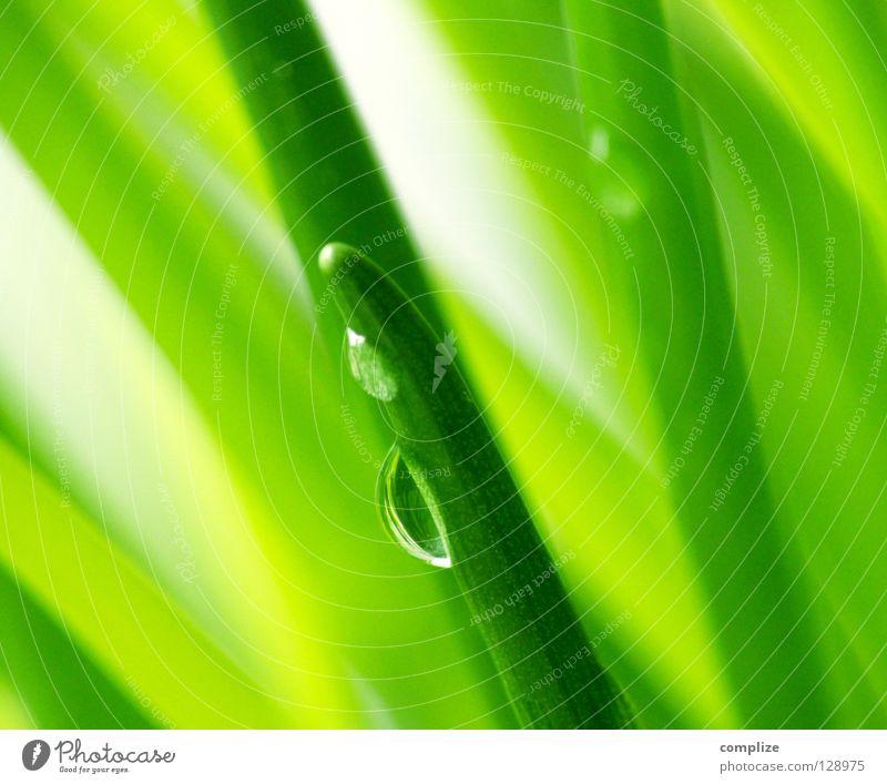 green II Natur Wasser grün Pflanze Wiese Gras frisch Wassertropfen Küche Gemüse Kräuter & Gewürze Bioprodukte Halm Zutaten Schnittlauch Porree