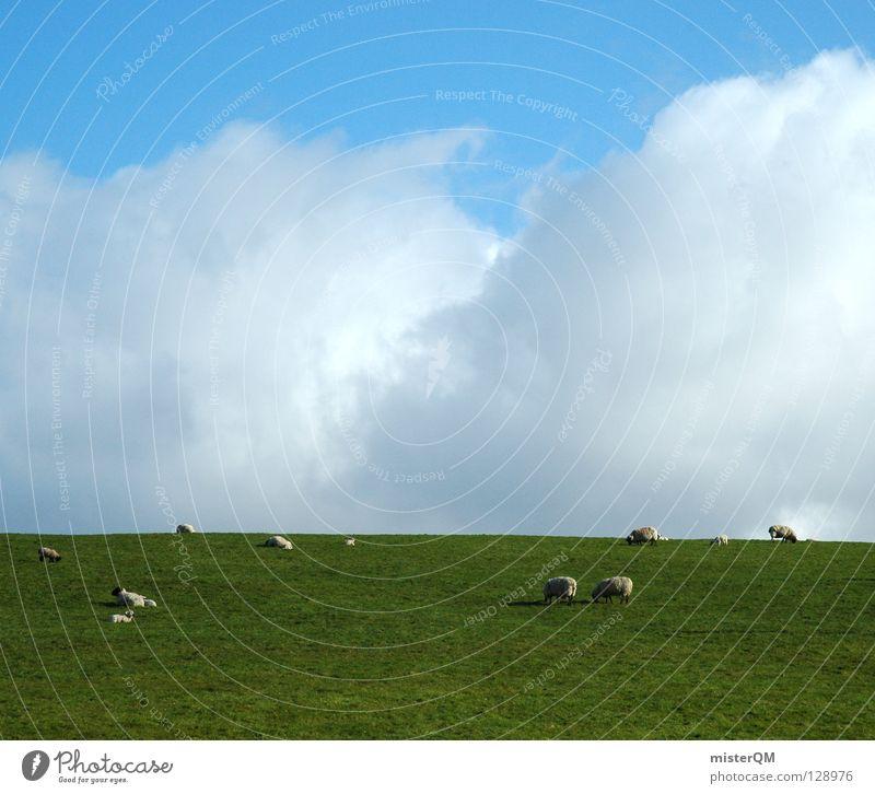 animal sky Himmel blau grün weiß Sommer Farbe Tier Wolken ruhig Wiese Gras grau offen hoch frei Zukunft