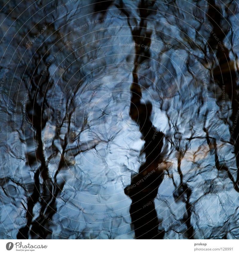 Glück Baum rein Sauberkeit schön Verschiebung verschoben Blatt Wald harmonisch abstrakt gemalt durcheinander feucht kalt durchsichtig Freude Zufriedenheit