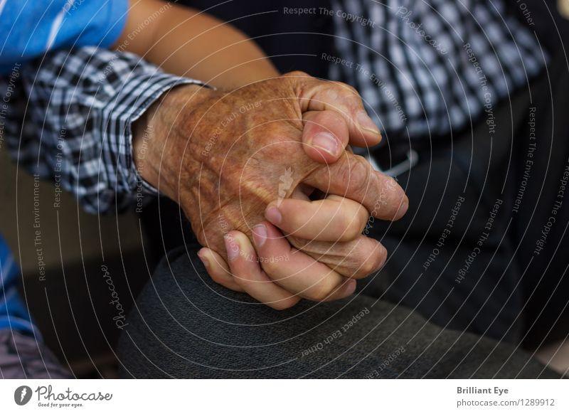 Alt und Jung unzertrennlich Sommer Mensch Kind Junge Männlicher Senior Mann Großeltern Großvater Familie & Verwandtschaft Hand Finger festhalten Liebe