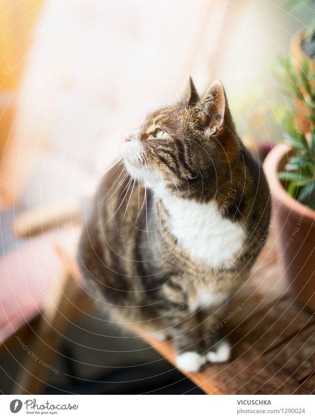 Katze auf Terrasse Katze Natur Pflanze Sommer Tier gelb Garten Lifestyle Wohnung Design sitzen Tisch Balkon Haustier Terrasse Topfpflanze