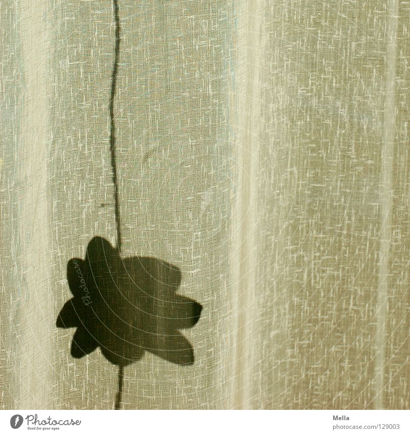 Der Sommer wirft seine Schatten voraus Blume Blüte Frühling Seil Dekoration & Verzierung Stoff Schnur Falte Vorhang hängen Gardine Nähgarn Tuch Textilien
