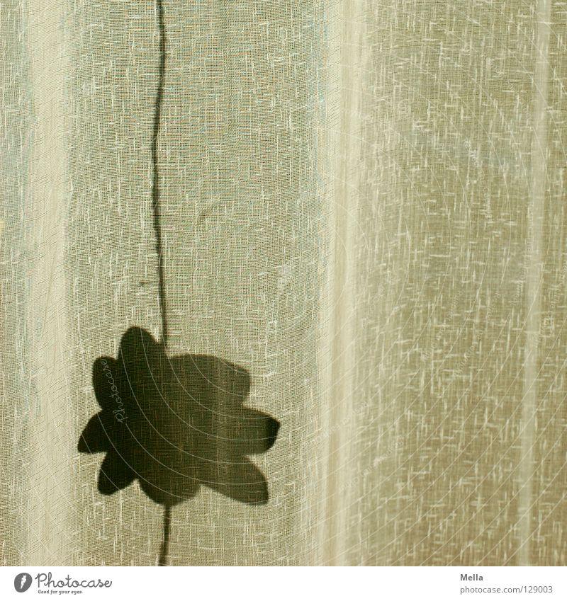 Der Sommer wirft seine Schatten voraus Gardine Vorhang Blume Blüte Faltenwurf Strukturen & Formen wellig hängen Dekoration & Verzierung Frühling Silhouette