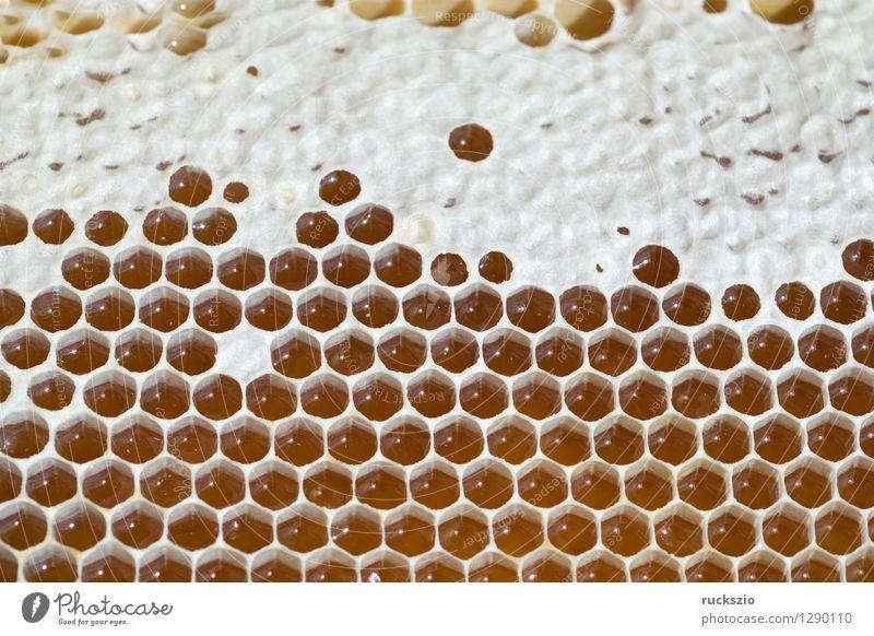 Honigwaben, waben, Bienenwachs, wachs, Bienenstock authentisch Insekt Haustier Kasten Pollen Nest Bienenwaben Staubfäden Beute Wachs Nektar Honigbiene