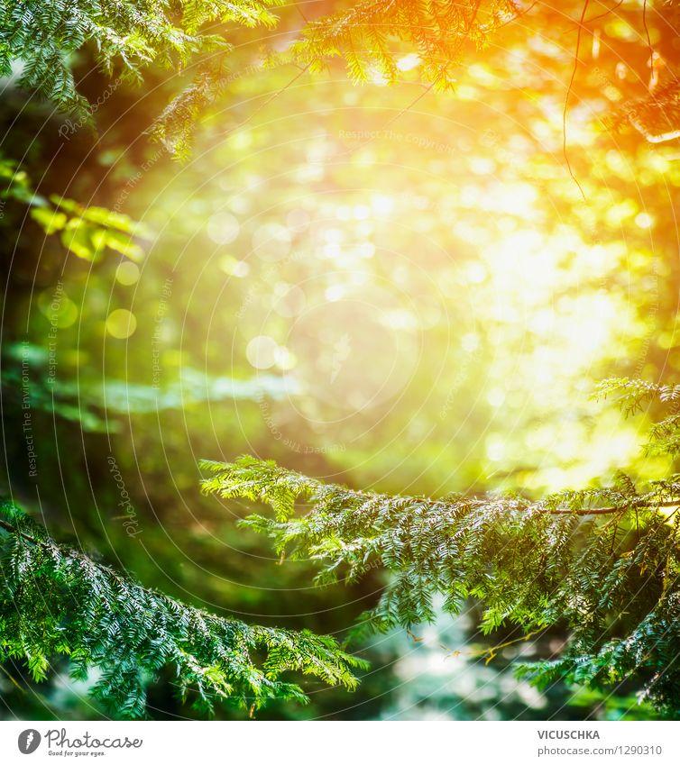 Hintergrund mit Tannenwald und Sonnenuntergang Natur Pflanze Weihnachten & Advent Sommer Landschaft Wald Herbst Frühling Hintergrundbild Garten Park Design Ast