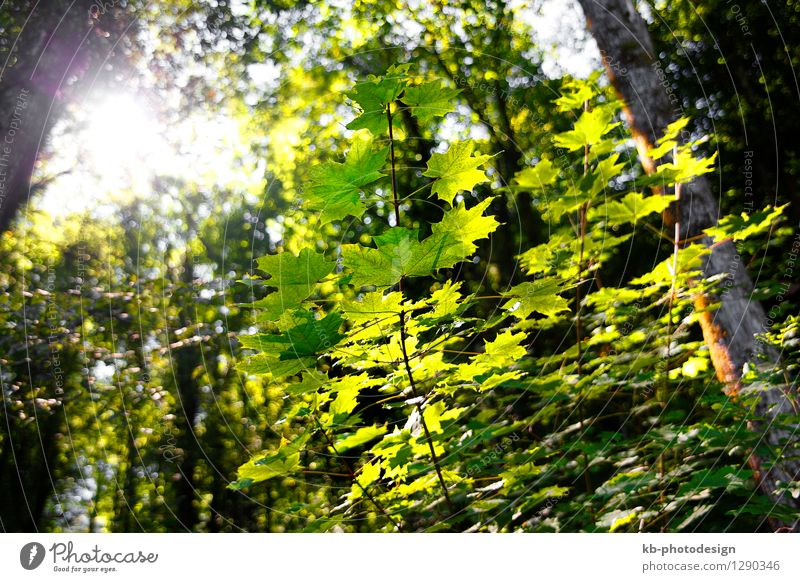 Green forest in autumn Natur Sommer Landschaft Wald Herbst Park