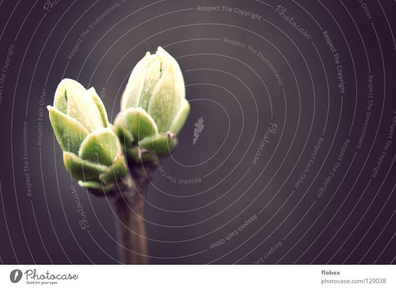 Zwei Freunde Baum Sträucher Stengel austreiben Wachstum entstehen mehrere Erwartung ruhig Biologie Frühling aufwachen grün Zukunft frisch Reifezeit Physik