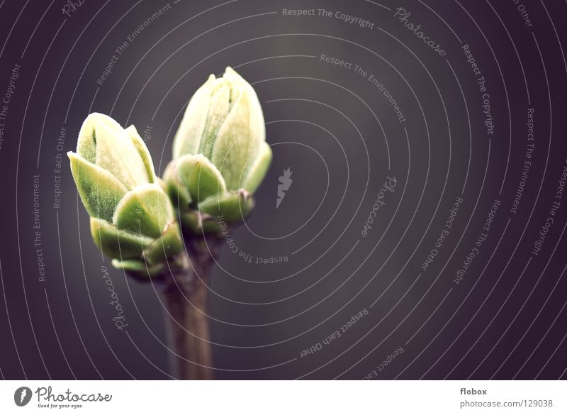 Zwei Freunde Natur Baum grün ruhig Tod Frühling Wärme Kraft Arme frisch Elektrizität neu Wachstum mehrere Zukunft Sträucher