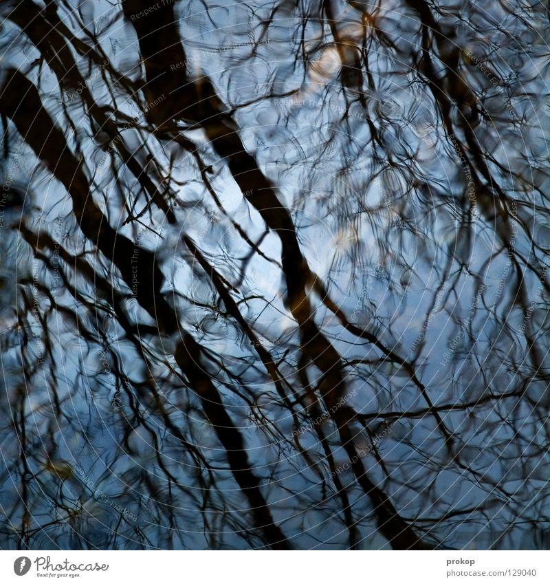 Erleichterung Himmel Natur blau Wasser schön Baum Sonne Blatt Wald kalt Sauberkeit Ast Fluss rein feucht durchsichtig