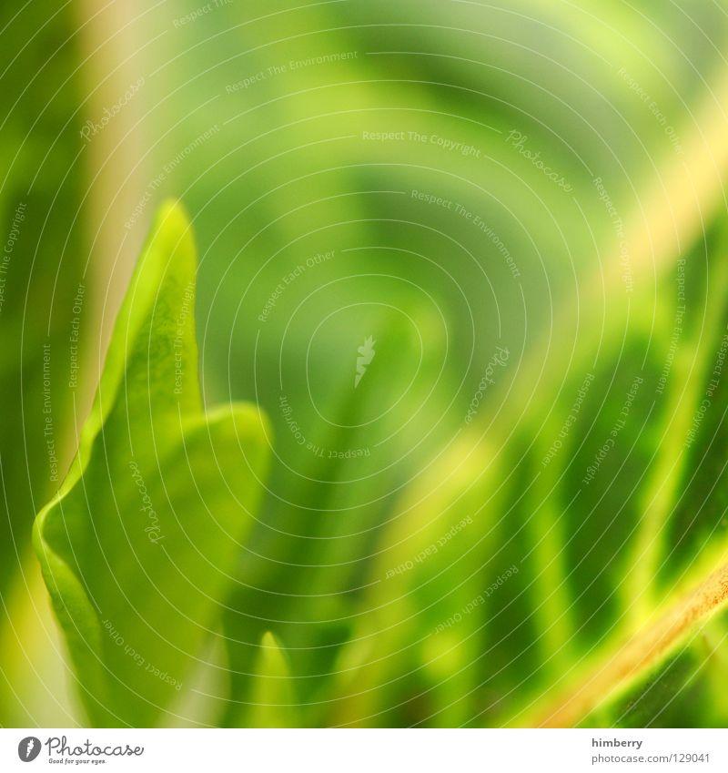 blattwerk III Natur Ferien & Urlaub & Reisen grün Farbe Linie Park Hintergrundbild frisch Urwald Botanik Gefäße Sauerstoff Florida Lunge Farbverlauf