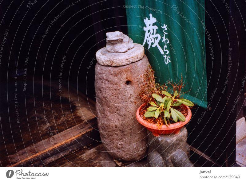 Q U A K Skulptur Steinskulptur Asien Japan Schriftzeichen arrangiert Begrüßung Wächter grün Pflanze Topfpflanze Holz Kröte Einlasskontrolle