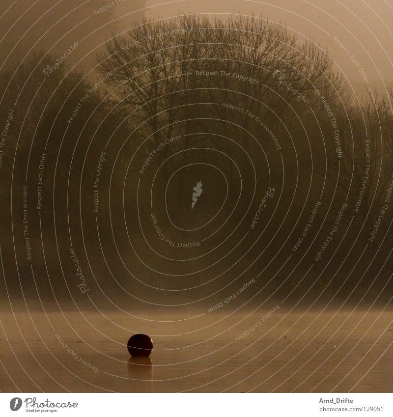 Boje See Wald Nebel Morgen Sonnenaufgang Reflexion & Spiegelung frisch kalt Herbst Baum Wolken Horizont Wellen Teich Schleier Wasser Himmel Glätte Küste