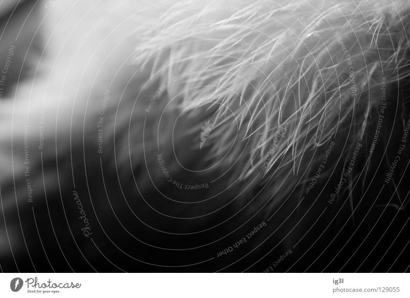 TRAUM°BILDER # Angriff der Riesententakeln```´ weiß Winter Denken träumen Hintergrundbild Angst außergewöhnlich Wandel & Veränderung Pause bedrohlich