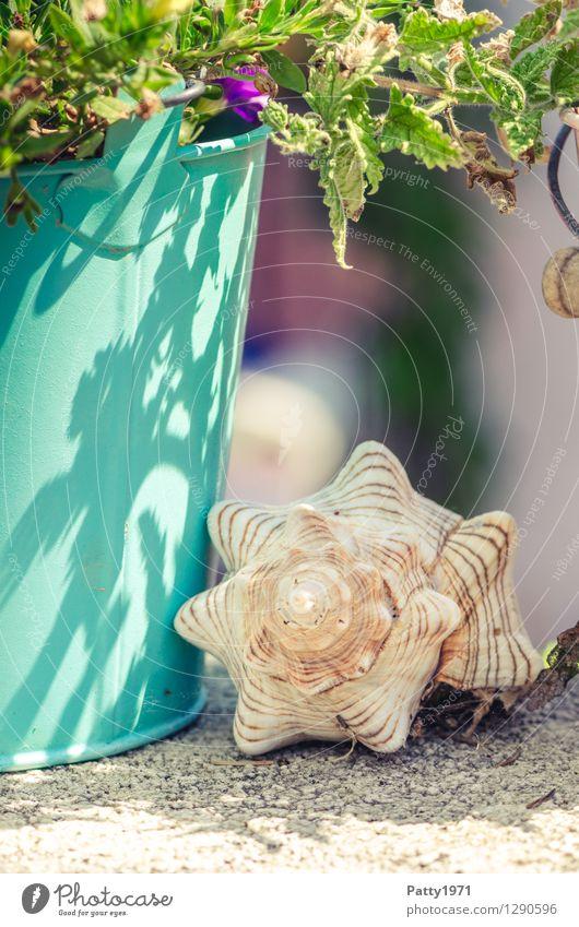 Auszeit harmonisch Zufriedenheit ruhig Ferien & Urlaub & Reisen Häusliches Leben Dekoration & Verzierung Muschel Eimer Muschelschale Schneckenhaus Metall