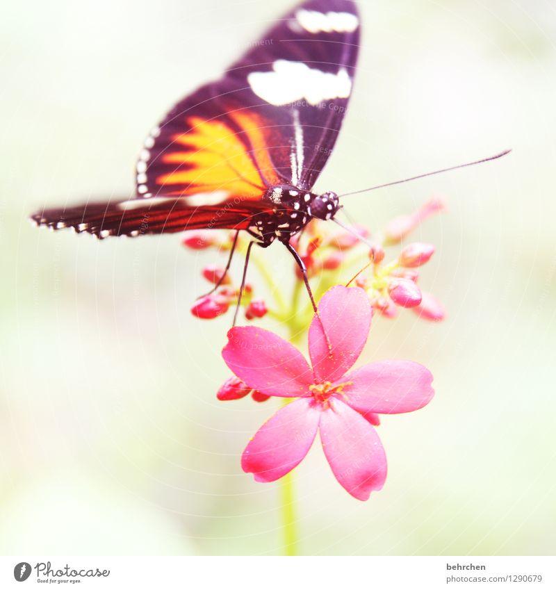 schnuppern Natur Pflanze schön Blume Erholung Tier Blüte Wiese außergewöhnlich Beine Garten fliegen Park Wildtier Flügel Blühend