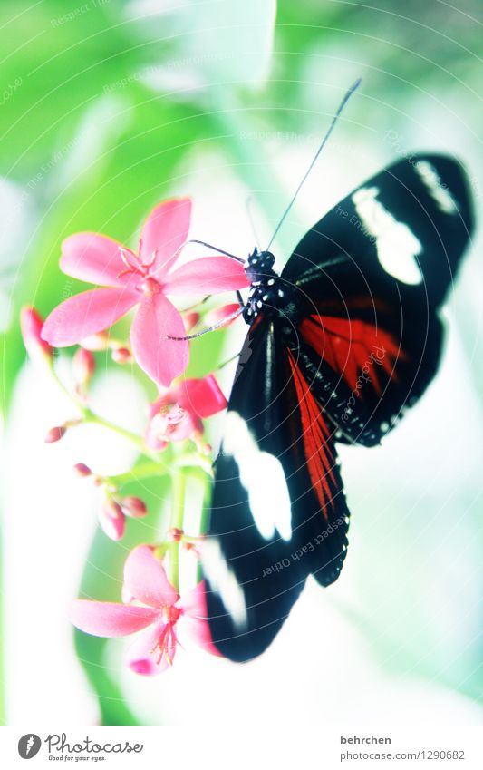 doris passionsfalter Natur Pflanze Tier Frühling Sommer Blume Blatt Blüte Garten Park Wiese Wildtier Schmetterling Tiergesicht Flügel 1 beobachten Blühend Duft