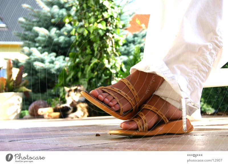 Just relax! Schuhe Katze Erholung Hose Zehen grün Fuß Fliesen u. Kacheln Terasse Pflanze