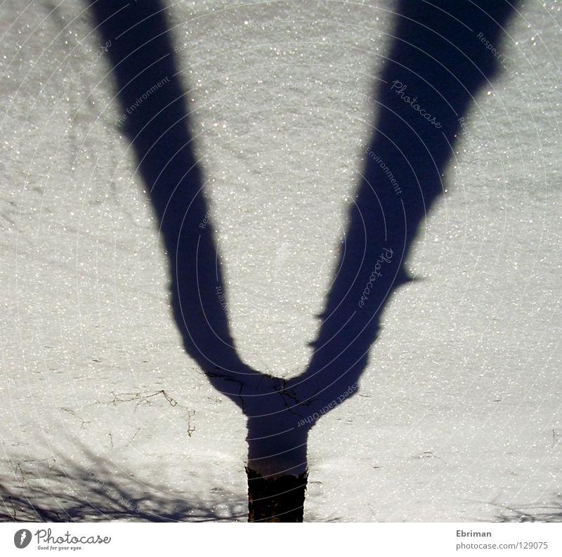 Stimmgabel Baum Musik Birke Geäst Winter weiß schwarz Baumrinde kalt Eis Schatten Gabel gewachsen Konzert Ast Zweig Schnee Spuren Stimme Natur glänzend
