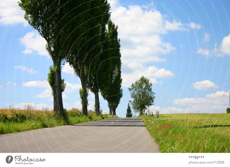 Die Strasse nach nirgendwo! Baum Feld Wiese Teer Wolken Sommer fahren Europa Straße Himmel Sonne Ausflug
