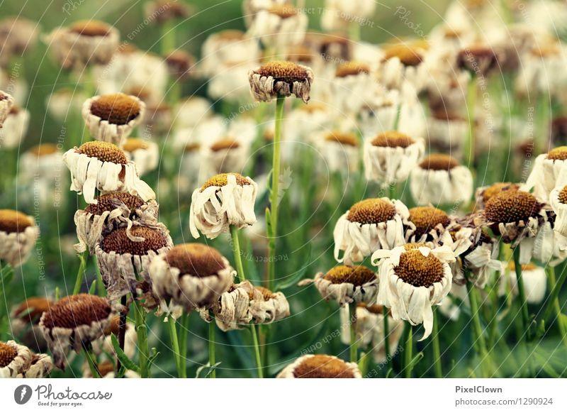 Kopf hängen lassen Natur alt Pflanze grün schön Sommer Blume Landschaft Blatt ruhig Blüte Wiese Gras Stil Gesundheit Garten