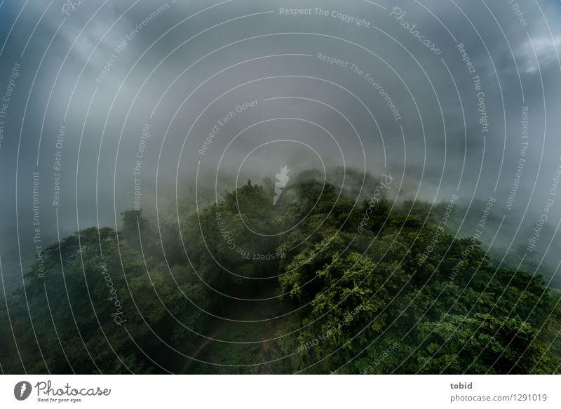 Mistwetter Pt.2 Natur Landschaft Urelemente Wolken Wetter schlechtes Wetter Unwetter Nebel Regen Baum Wald Hügel bedrohlich dunkel kalt nass oben Einsamkeit