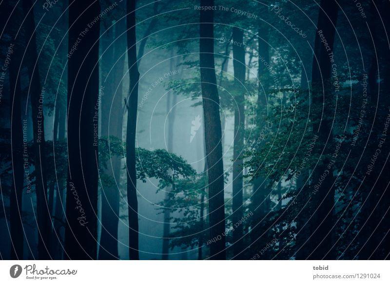 Regenwald Natur Landschaft Pflanze Klima schlechtes Wetter Nebel Baum Wald bedrohlich dunkel Einsamkeit mystisch Farbfoto Gedeckte Farben Außenaufnahme