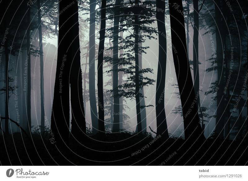 Düster Pt. 2 Natur Landschaft Pflanze Herbst schlechtes Wetter Nebel Baum Wald Hügel bedrohlich dunkel Einsamkeit mystisch Lichteinfall gruselig Waldlichtung