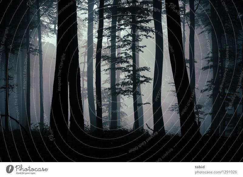Düster Pt. 2 Natur Pflanze Baum Einsamkeit Landschaft dunkel Wald Herbst Nebel bedrohlich Hügel gruselig mystisch schlechtes Wetter Laubbaum Lichteinfall