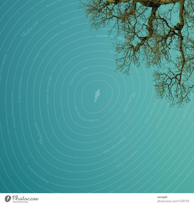 Eichenbaum Natur alt grün Pflanze Sonne Baum Wachstum Ast Baumstamm Zweig Baumkrone Baumrinde Rahmen Blattgrün verzweigt