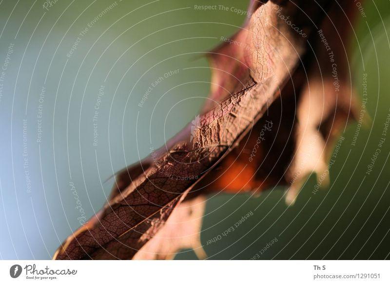 Blatt Natur Pflanze grün schön Sommer ruhig Frühling Bewegung Herbst natürlich braun elegant authentisch ästhetisch einfach