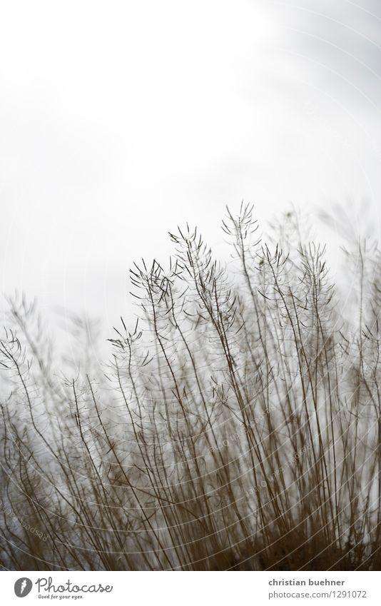 ein hauch von strauch Natur Landschaft Pflanze Luft Himmel Wolken Herbst Nebel Sträucher Wildpflanze Hügel Felsen Vulkan Teide Cañadas NP Romantik Mitgefühl