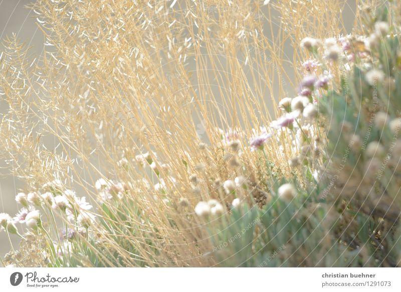 more teide flowers Natur Ferien & Urlaub & Reisen Pflanze Sommer Erholung Blume Landschaft Berge u. Gebirge Gefühle Senior Gras natürlich träumen Tourismus Idylle Sträucher