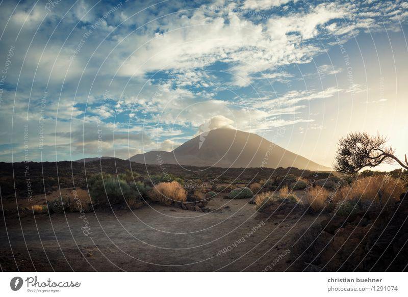 Vulcano island - tenerife Natur Landschaft Himmel Sommer Pflanze Baum Sträucher Felsen Vulkan Teide außergewöhnlich Kraft schön Sehnsucht Fernweh Abenteuer