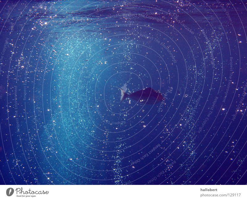 Malediven Water 14 Wasser Meer Unterwasseraufnahme tauchen Riff Schnorcheln