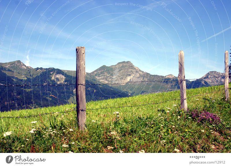 Die Alm Gras Wolken Sommer Zaun saftig Ferien & Urlaub & Reisen schön Physik Berge u. Gebirge Himmel Sonne Pfosten Blühend Wärme