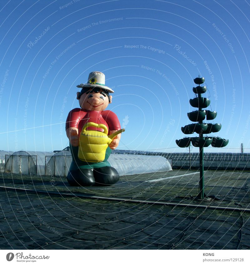 he got can Himmel Baum gelb Garten Luft Wetter groß Macht Hut Tanne dick Puppe gießen Gefäße Blauer Himmel Kannen