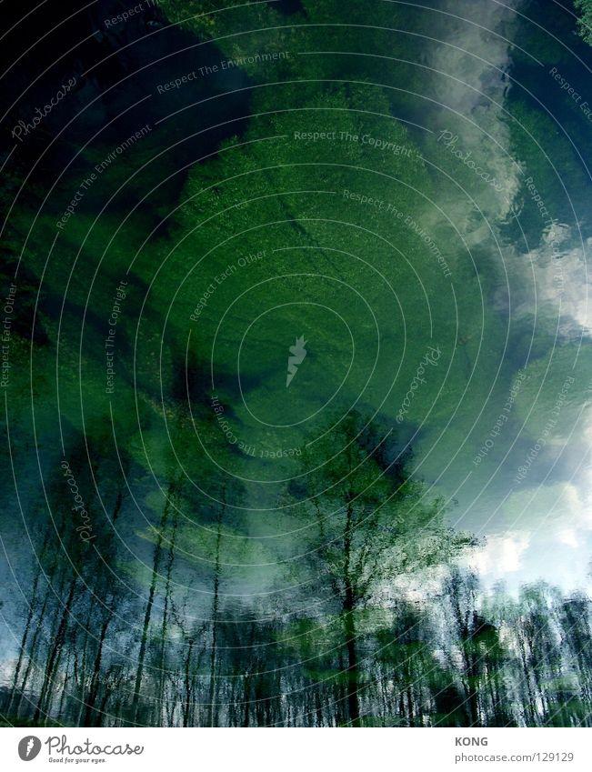 liquid skies Wasser Himmel Baum Pflanze Wald dunkel Frühling Wachstum Fluss Vergänglichkeit gruselig Gewässer