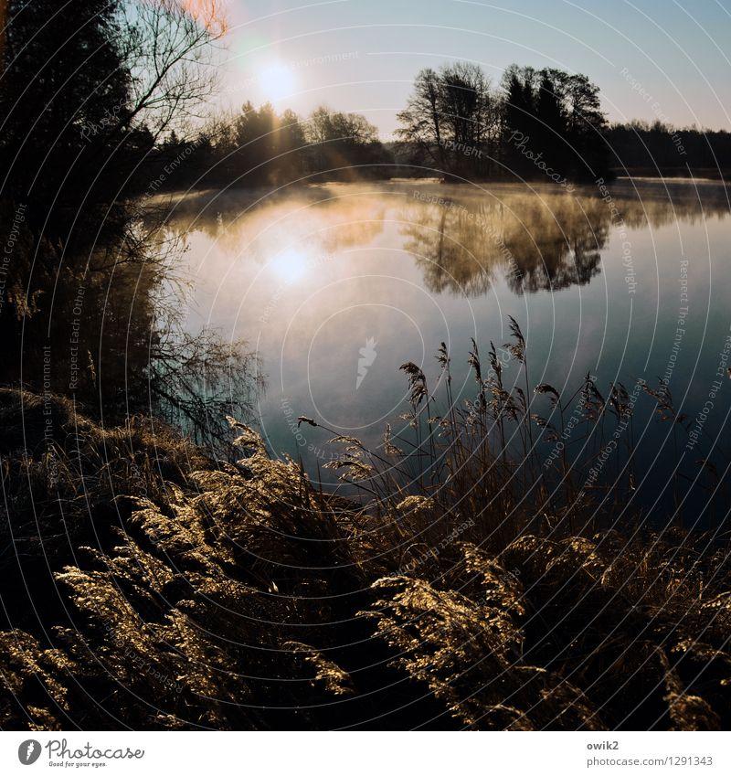 See, friedlich Umwelt Natur Landschaft Pflanze Luft Wasser Wolkenloser Himmel Horizont Wetter Schönes Wetter Baum Gras Sträucher Röhricht Insel Teich Seeufer