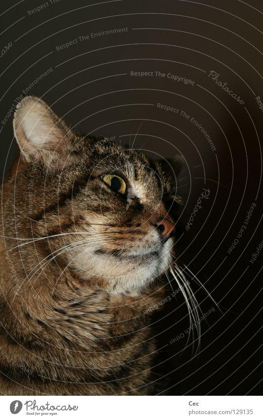 Was Du nicht siehst Katze Tier schwarz Ferne dunkel Freiheit träumen braun Wildtier wild frei leer Macht Neugier Fell Tiergesicht