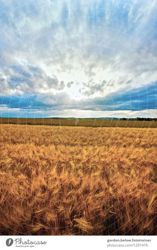Erntezeit blau Sommer Landschaft Wolken Umwelt gelb gold Ernährung Klima