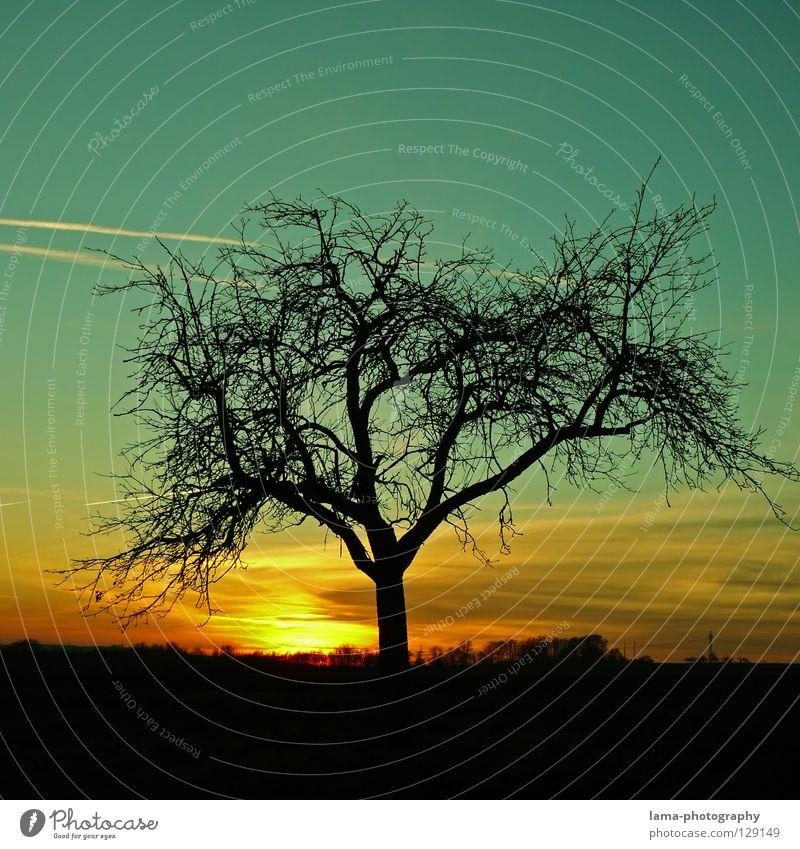 When the sun goes down... Sonnenuntergang Dämmerung Sonnenstrahlen Sonnenaufgang Morgen Baum Winter Wachstum gedeihen Silhouette glühen Panorama (Aussicht)