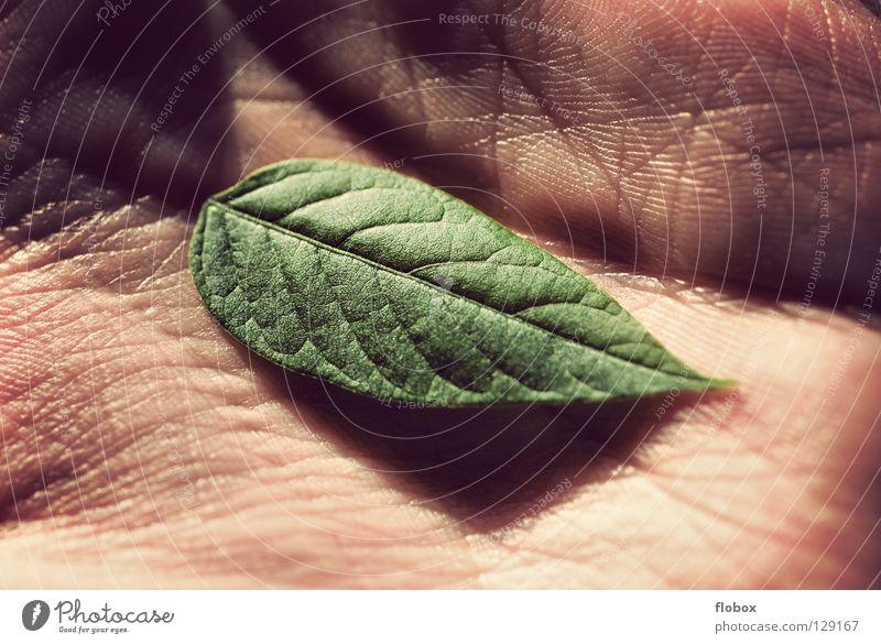 Schutzlos II Blatt Umwelt Umweltschutz grün Klimawandel Ozon Ozonloch Photosynthese Hand Finger ökologisch global Pflanze Pflanzenschutz Leben Wachstum Natur