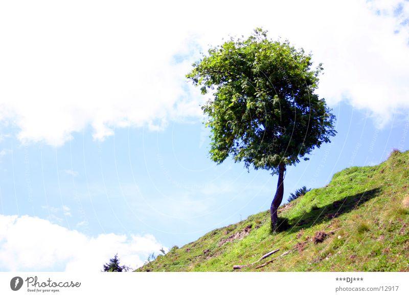 Lonely tree! Gras Wiese Baum Wolken Steigung Ferien & Urlaub & Reisen Sommer Himmel Wetter Schatten Berge u. Gebirge Baumstamm